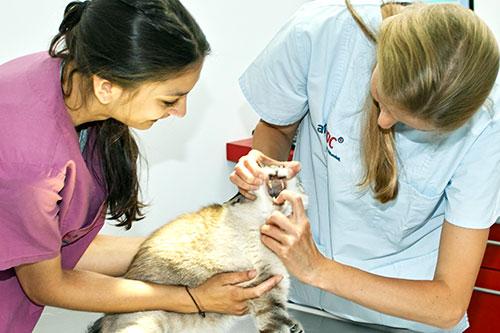 Untersuchung beim Tierarzt